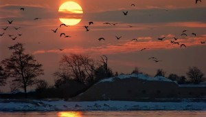 1056675__sunset-birds_p